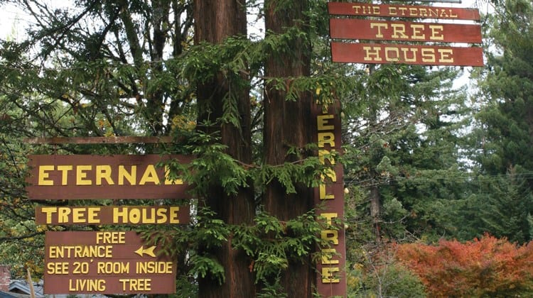 Eternal Tree house