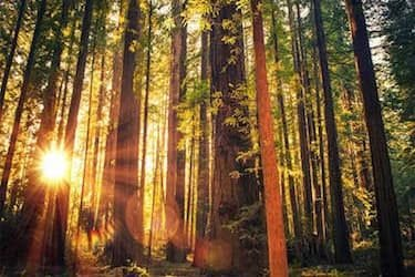 Best Places to See The Redwood Forest
